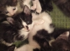all_the_kittens